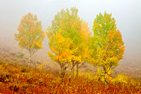 Aspens on Teton Pass